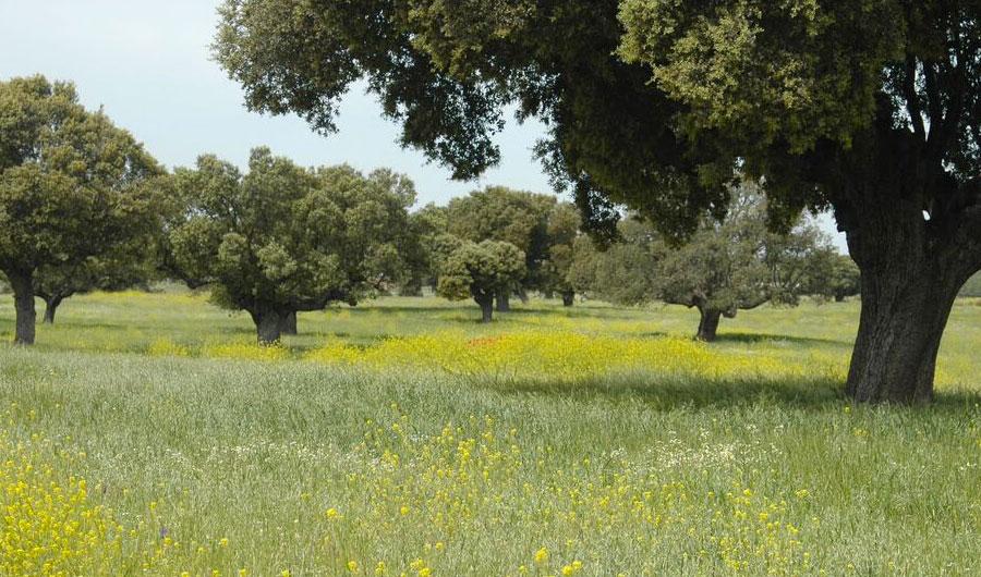 Palacio de montarco for Vide jardin tournefeuille 2015